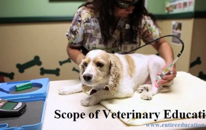 DVM Scope of Veterinary Doctor, Medicine, Courses and Universities in Pakistan